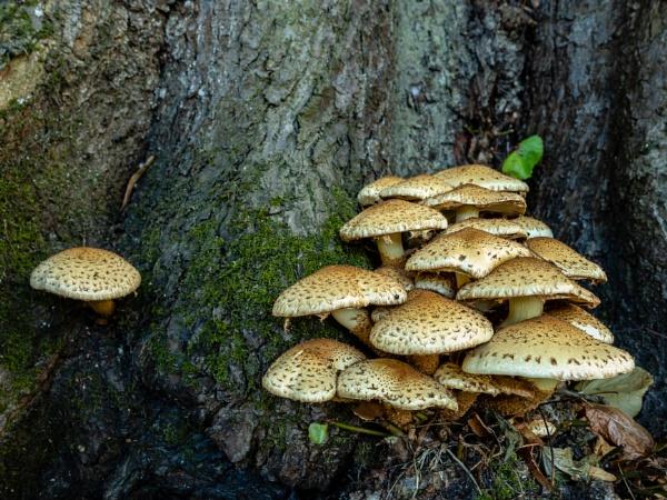 Mushrooms. by Martyn_U