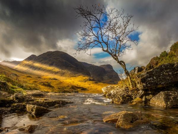 Rowan Tree by Mark_Callander