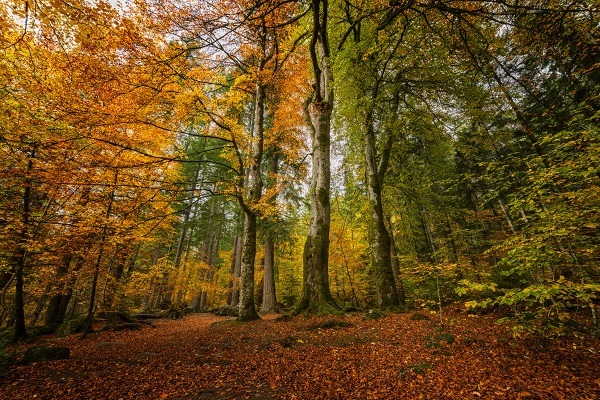 Autumnal division by meyeview