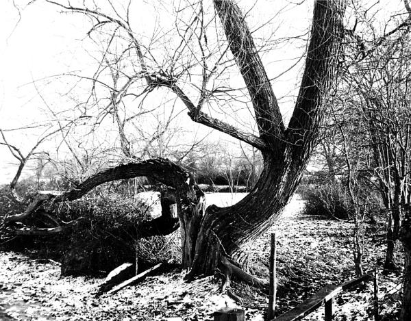 Broken Tree by Lontano