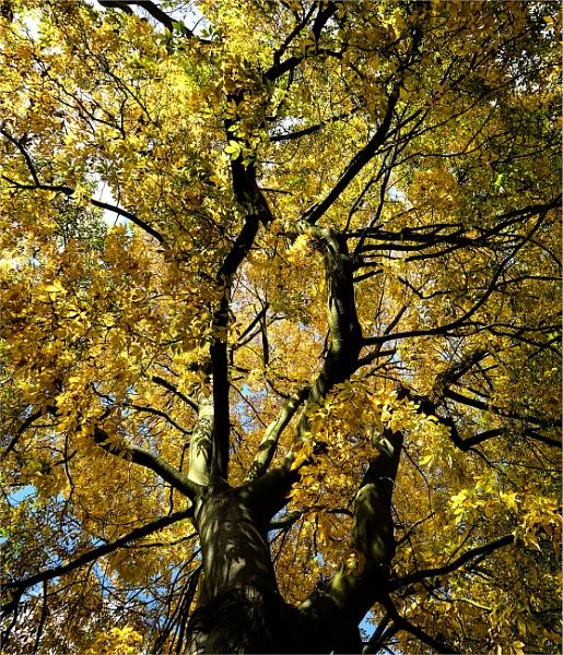 A time of change Kew Gardens London by StevenBest