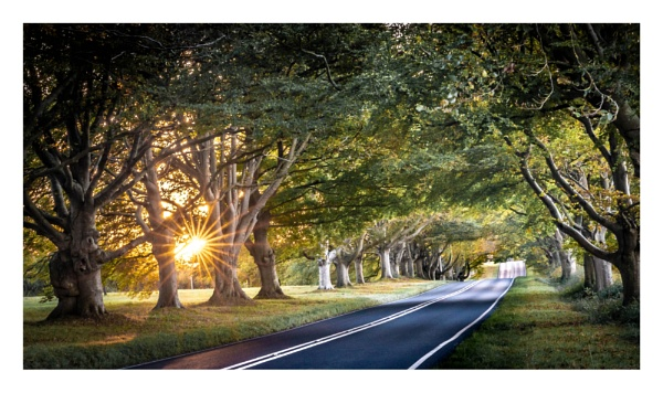 Beech Avenue by true