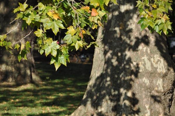 Hyde Park shadows... by Chinga