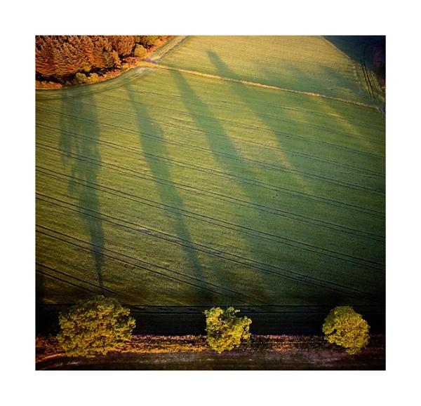 Tree Line Shadow Study 1 by paul_gaughan