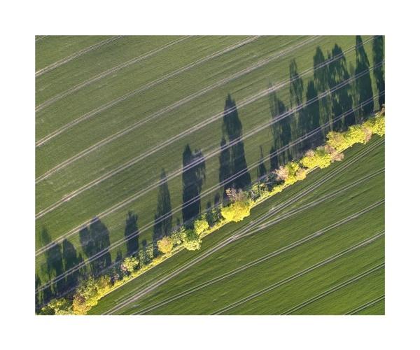 Tree Line Shadow Study 2 by paul_gaughan