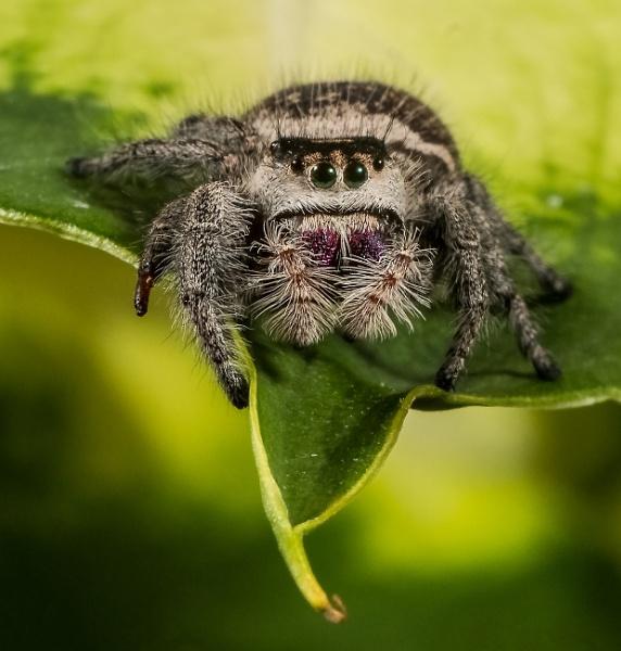My wee Jumping Spider Macro shot. by sidnox