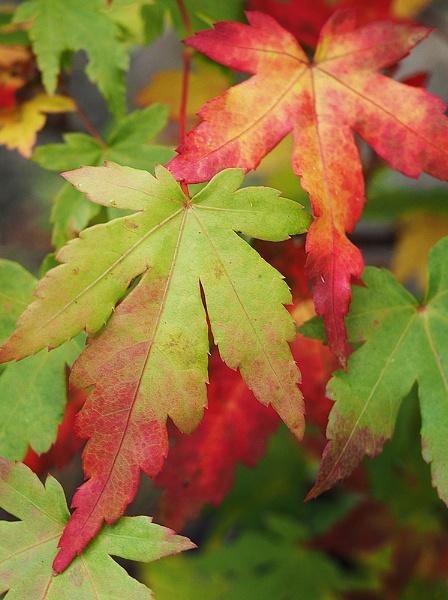 Foliage by Rob_Taylor