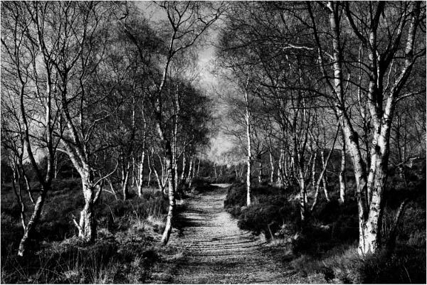Path Through the Birches by dark_lord