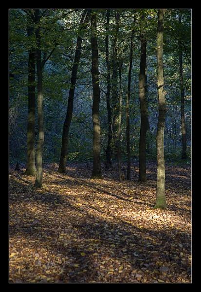 Enchanted Wood 2 by BobDraper