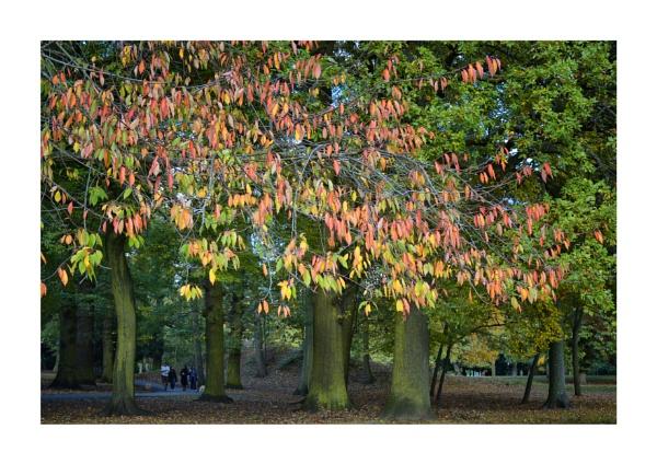 Autumn Colour by BigAlKabMan
