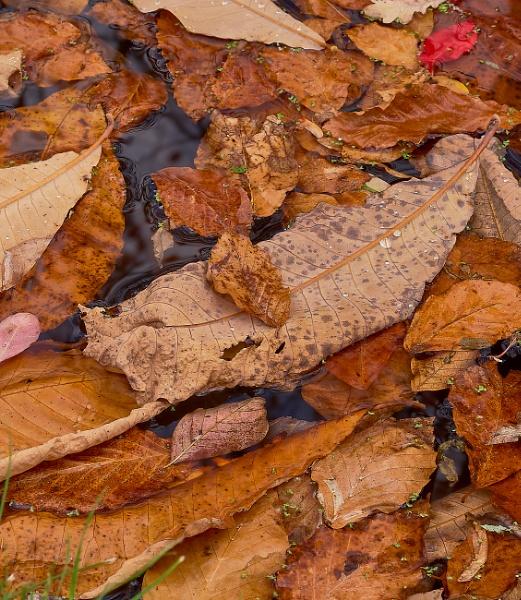 Floating Leaves by JJGEE