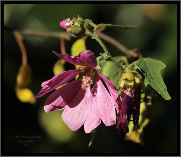 Floral Shadows by canoncarol