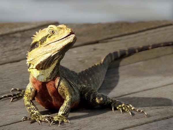 Male Water Dragon by Wireworkzzz