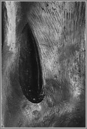 Sculpture Detail 5