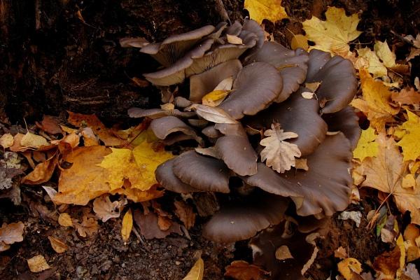 autumn detail #1 (v.1 and v.2) by leo_nid