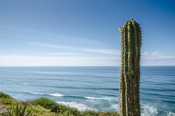 Cactus by joop_