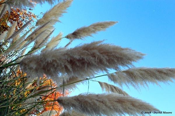 Pompas Grass by youcantoo