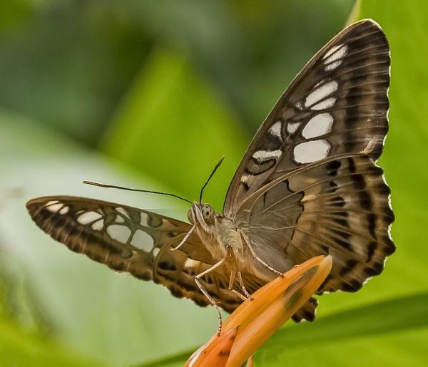 Beatiful butterfly by Angela1969