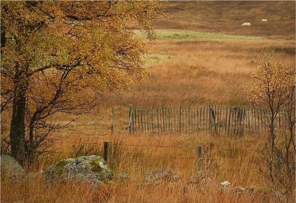 Fences, Glenisla by MalcolmM
