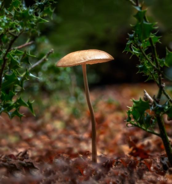 Mushroom by PLCimagery
