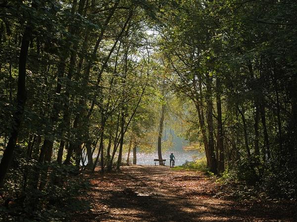 Woodland Walk by Chrism8