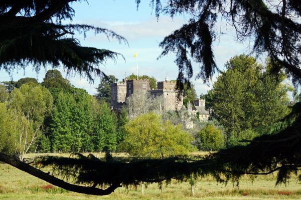 Powderham Castle through the trees