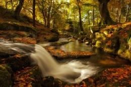 Autumn in Ireland.