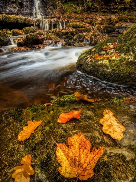 Campsie Glen, Scotland. by Mark_Callander