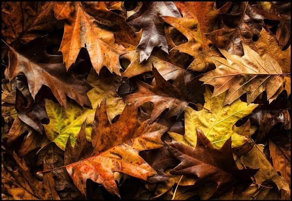 Autumn Essence by Niknut