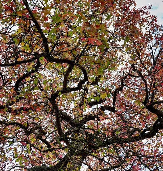 Autumn colours by StevenBest