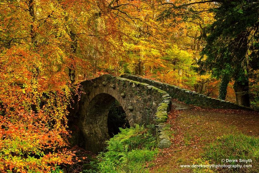 Autumn At Foley's Bridge