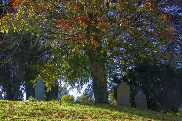 Under The Tree by interchelleamateurphotography