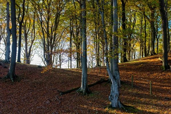 Talkin Woods by mbradley