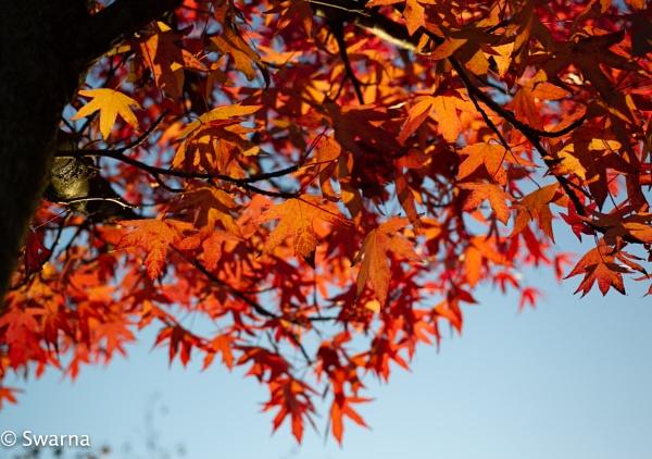 Fall Colours II by Swarnadip