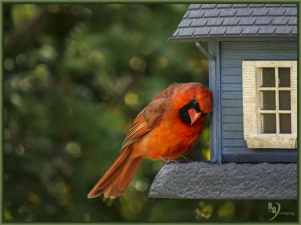 Gosh I love this feeder by rgg