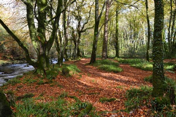 A lovely walk along this golden path by netta1234