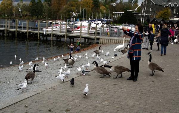 Bird Feeder by Hamlin