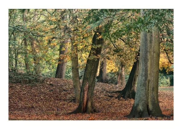 Autumn in Abington Park by BigAlKabMan