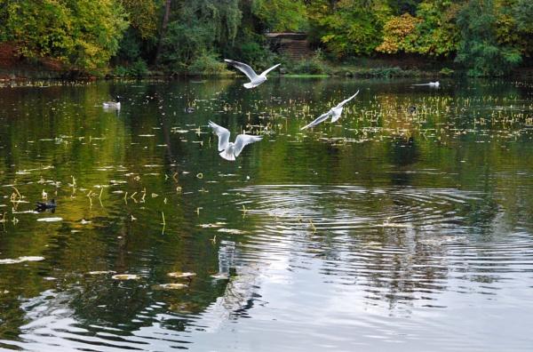 Three birds by KrazyKA