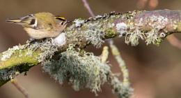 Focused On Lichen