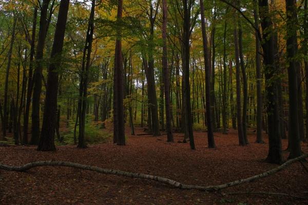 Autumnal Gleam Series #69 by PentaxBro