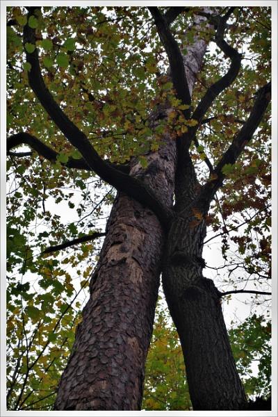 Autumnal Gleam Series #71 by PentaxBro
