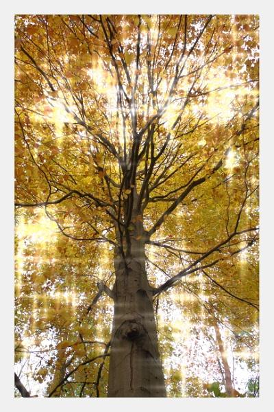 Autumnal Gleam Series #48 by PentaxBro