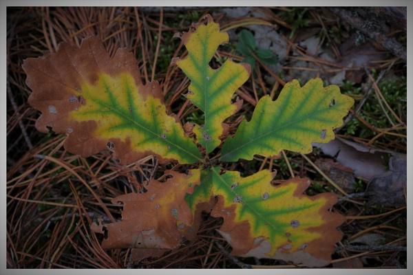 Autumnal Gleam Series #5 by PentaxBro