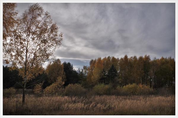 Autumnal Gleam Series #34 by PentaxBro