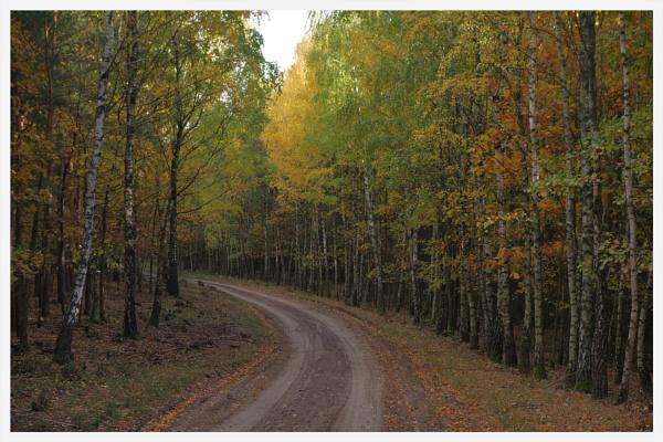Autumnal Gleam Series #22 by PentaxBro