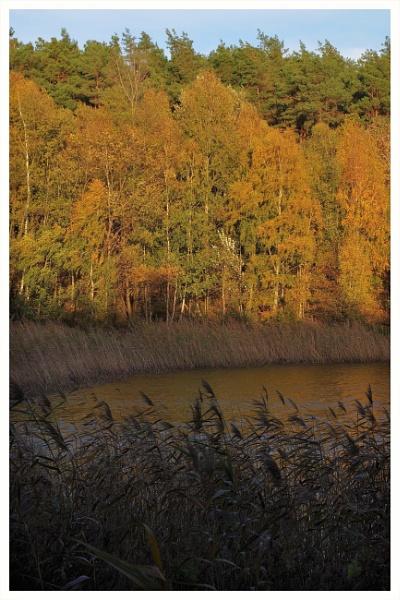 Autumnal Gleam Series #51 by PentaxBro