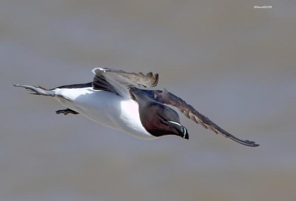 Fly past by DaveNewbury