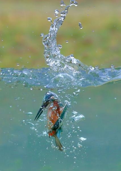 Having a Dip by Juanita