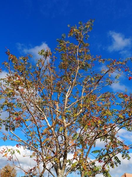 autumn by derekd